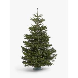 image-John Lewis & Partners Nordmann Fir Real Christmas Tree
