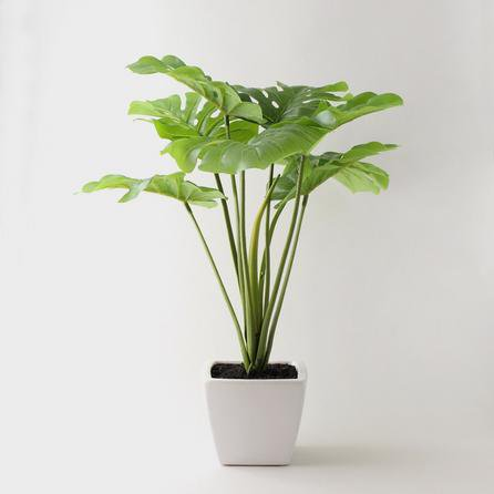 image-Artificial Cheese Plant Green in Ceramic Pot 53cm Green