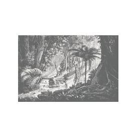 image-Amazonia Wall Mural (colour: Monochrome, size: Medium (300w x 300h))