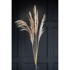 image-Five Piece Pampas Grass Stems - Natural