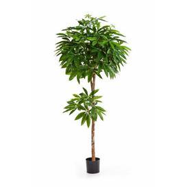 image-Eurelyo Floor Lucky Chestnut in Pot artplants.de Size: 180cm H x 70cm W x 70cm D