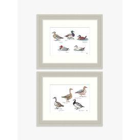 image-Madeleine Floyd - Wild Geese & Ducks Framed Print & Mount, Set of 2, 27.5 x 33.5cm, Brown/Multi