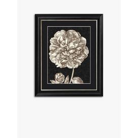 image-Dramatic Peony II Framed Print & Mount, 60 x 50cm, Black/White