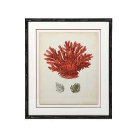 image-Framed Red Coral Print