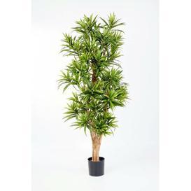 image-Yasu Floor Dracaena Tree in Pot artplants.de Size: 150cm H x 45cm W x 45cm D, Flower/Leaves Colour: Green