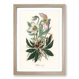 image-Christmas Rose Illustration - Picture Frame Graphic Art Print on MDF