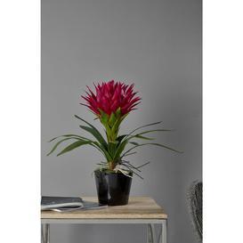 image-35cm Artificial Flowering Plant in Pot Ebern Designs