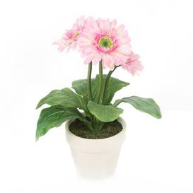 image-Gerbera Flowering Plant Marlow Home Co. Flower Colour: Pink