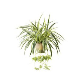 image-Artificial Spider Plant in Pot