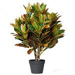 Representative image for Artificial Plants & Trees