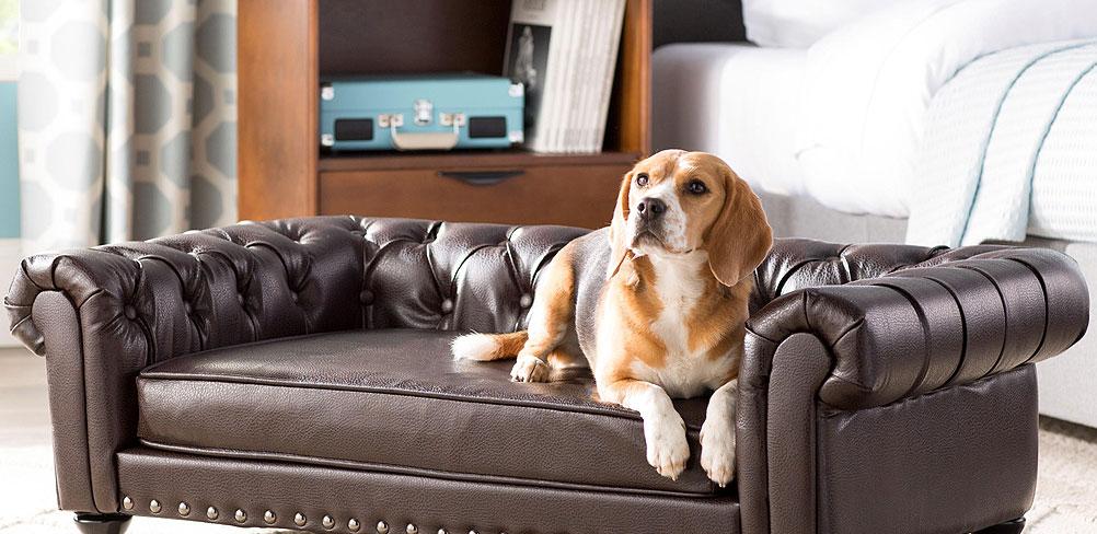 image-Pets