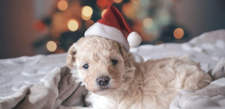 image-Christmas Gifts For Your Furry Friends